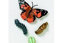 Butterfly Garden / by Debby Krzyston
