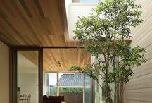Tree Indoor
