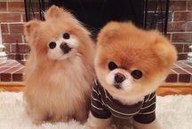 Cute Dogs,