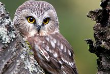owl crush / The owl is the wisest of all birds because the more it sees, the less it talks.
