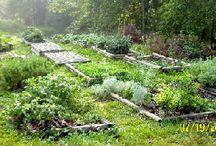My organic garden ideas !!