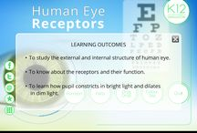 Human Eye Receptors / Human Eye Receptors app makes it easy to understand the function of human eye through 3D animations and simulation of the entire eye and physiology