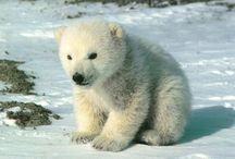 Fuzzy Fuzzy Cute Cute / by Kristen Menke
