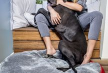 delCane dog beds / Luxury dog beds made of Italian, genuine grain leather. All delCane design!  A stylish addition to any interior!