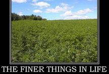 The Finer Things in Life - Kim Kroner Real Estate