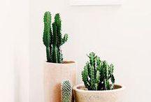 """6 Tipos de plantas """"duras de matar"""" - para cultivar dentro de casa!"""