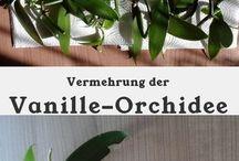 Orchideen - Pflege, Sorten, Liebe