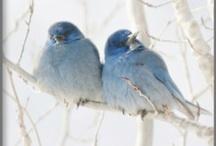 All the Little birdies