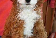 Honden / Mooi