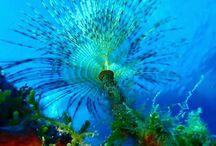 #scubadiving#underwaterphotography