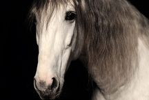 horses / by nancy trussell