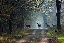 Forest & Undergrowth
