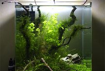 Aquascaping Ideas / Aquascaping inspiration