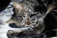 Cat Mikke / katti karvakorva :)