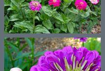 Garden 2015 / by Julia