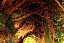 Tree Spirits / Inspiring trees and then some...