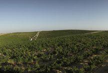 Fotos de nuestros paisajes. / Fotos de los paisajes de nuestras viñas realizadas por el fotógrafo Juan Flores.