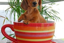 Wiener Dogs  / by Grunge Gurl