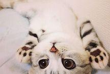 귀여운동물사진