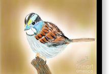 Delightful Sparrow!