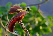 Burung Langka di Indonesia