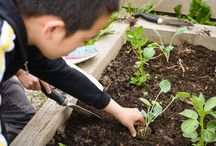 Earth Bites / We are a team of educators, urban farmers & nutritionists working closely with thousands of students in local schools, teaching them to grow their own food, create seasonal snacks and run their own farmers markets.