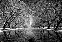 Black&White Foto / Black&White Foto