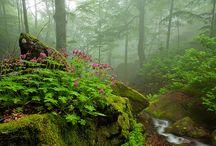 Natures Beauty / by Nancy Blaschak