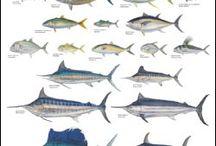 Pesca en Javea