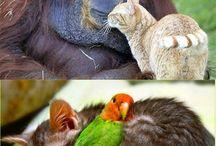 Kloka djur