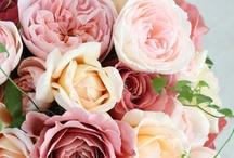 お花の写真 / 美しい花がお嫌いな方はいませんよね。 お花屋さんに行けない日のためのボードです。