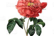 istock floral illustrations