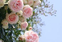 Roses / by Ellen Behan-Heinbockel