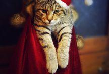Merry, Merry / by Kim Urban