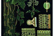 botaniska skolplancher