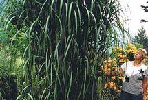 Gardening. --someday