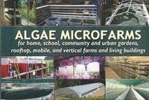 Algae farms