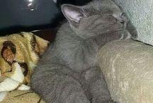 sweet kitti