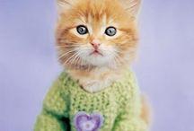 Pets vestidos de crochê / Dicas de crochê do site www.floresdecroche.com.br  Visite-nos Curta no FB: @clubedecrocheoficial