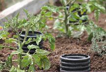 Gardening / by Beth Sidell