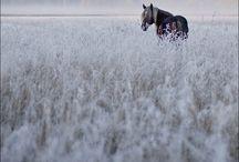 equestrian / by Tariana Davis