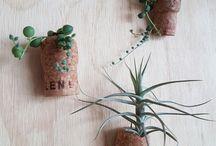 planty creations