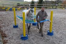Horses - Exercise & Training / Information and References for Horse Training and Exercise.