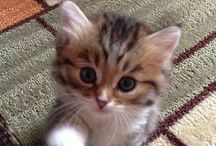 I Love Kittens / Welcome to I Love Kittens! Please ONLY Share Cute Kitten Pictures. Thank you x