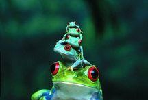 개구리 도마뱀 도롱뇽