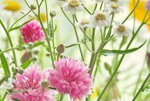 flowere