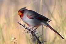 Birds / by Cathy Kaler
