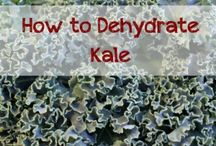 Dehydrating / by Carol Young