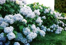 Beautiful blooms / by Jill Richburg