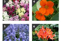 Plants that bloom all year round
